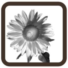Pyłki roślin Airfree Iris 125